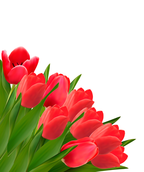 tulipanes vector