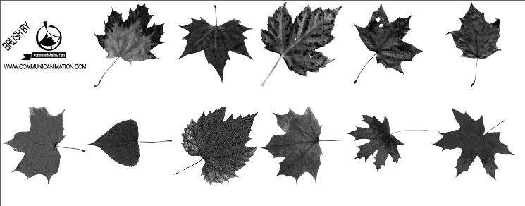 Pinceles de hojas de otoño gratis para Photoshop