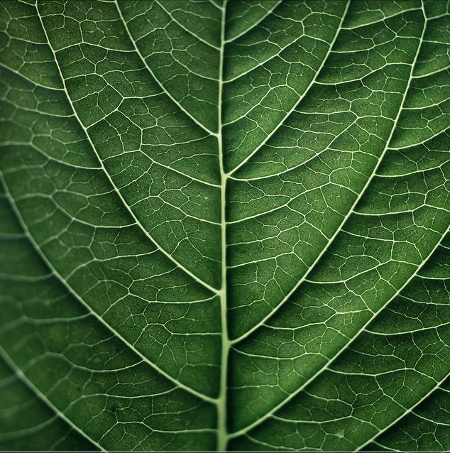 Texturas de hojas gratis