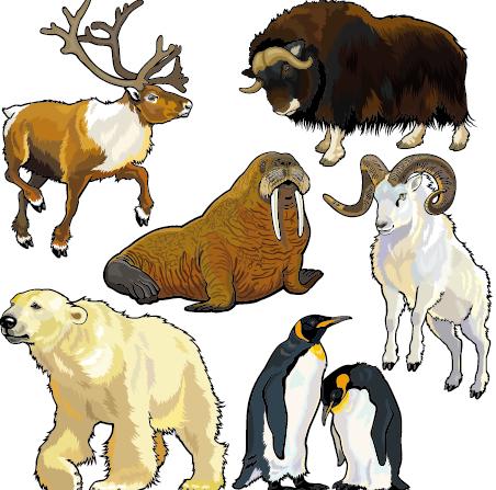 vectores-animales-salvajes7